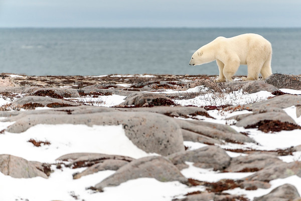 Waiting for Ice Floes to form on the Hudson Bay