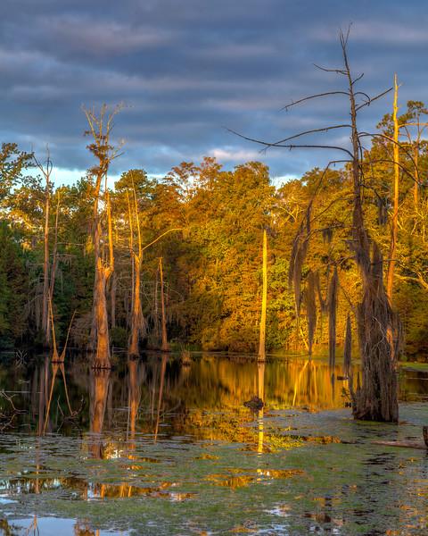 Swamp Sunrise
