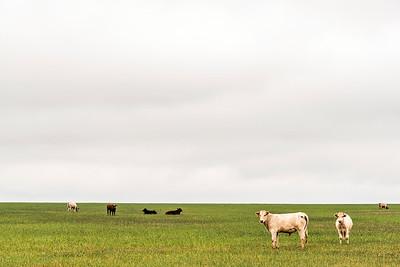 Texas Farmland