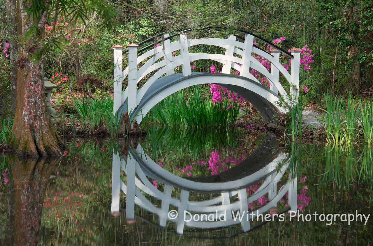 Cypress Bridge - Magnolia Gardens