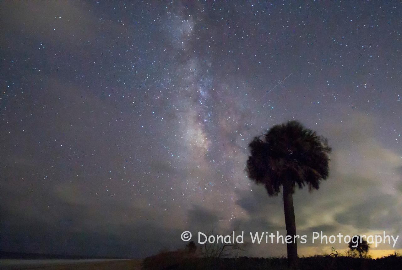 Palmetto Stars - Hobcaw Beach
