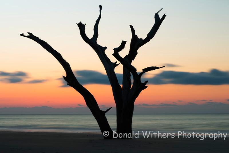 Sunrise Silhouette - Bull Island