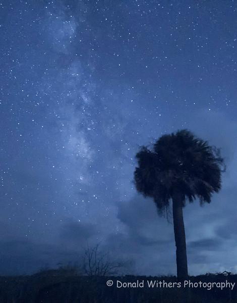 Palmetto Milky Way - Hobcaw Beach