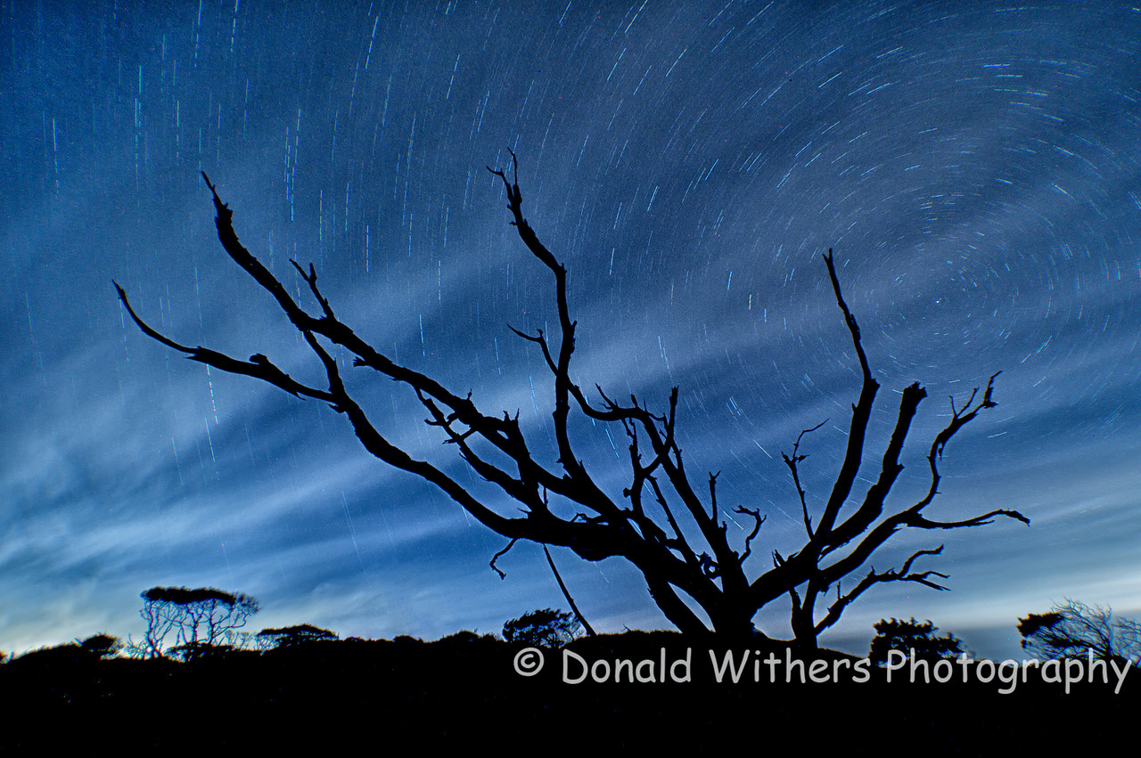 Hobcaw Star Trails