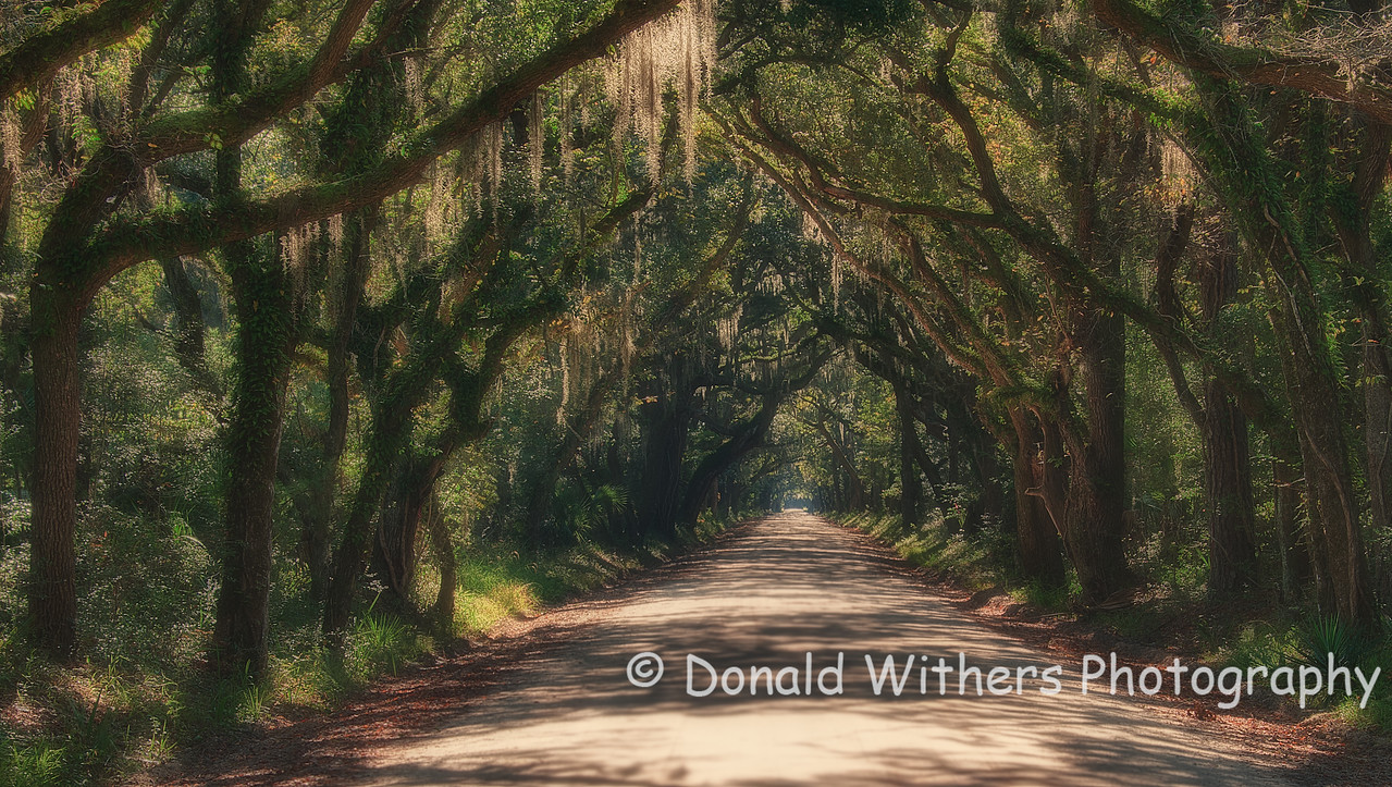 Veil of Oaks -  Edisto
