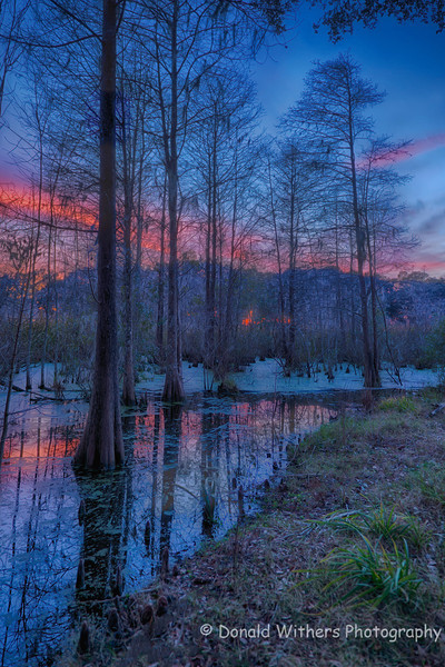 Palmetto Sunset