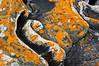 Lichen, Wreck Island