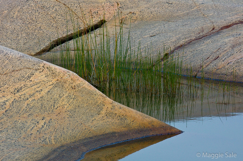 Rocks, Reeds, and Water