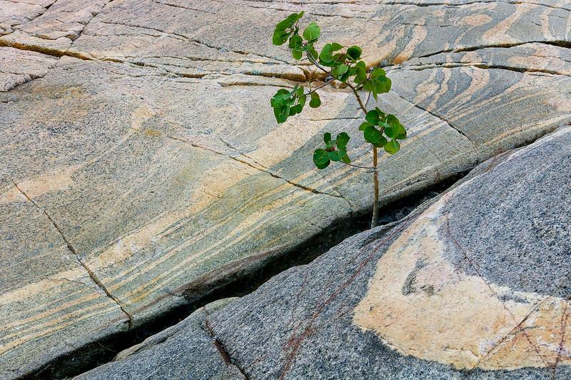 Tree Survivor