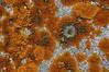 Lichen Pattern