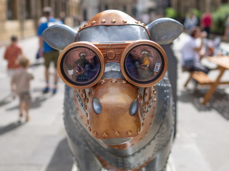 Cows in Cambridge (Aug 2021)