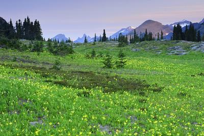 Avalanche Lilies, Logan Pass