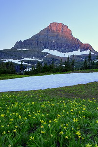 Reynolds Mtn. & Avalanche Lilies
