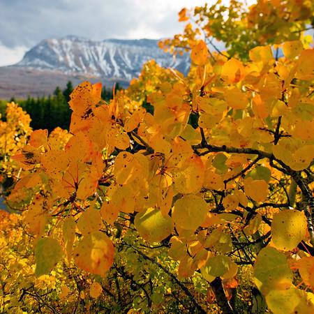 Fall Colors, Glacier National Park