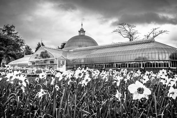 Botanic gardens spring B&W