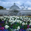 Early blossoms in Glasgow Botanic Gardens