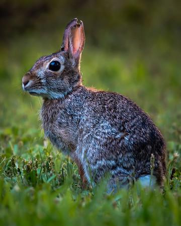 20190516_Rabbit_121