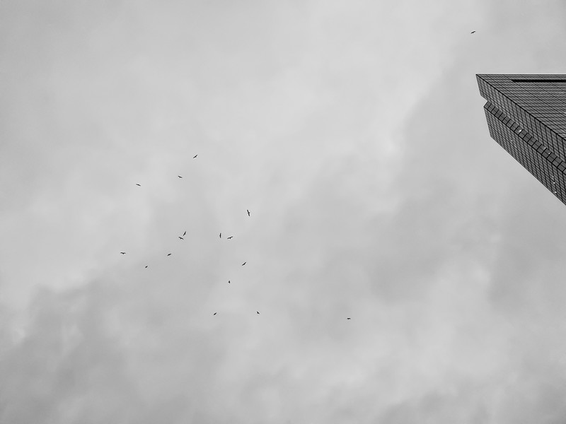 300 Clarendon Birds
