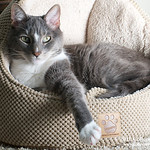 Pet Portrait Packages  Are fully customizable and packages start at 0 and this includes a  credit toward the purchase of prints.  50% of the package fee is due at the time you schedu ...