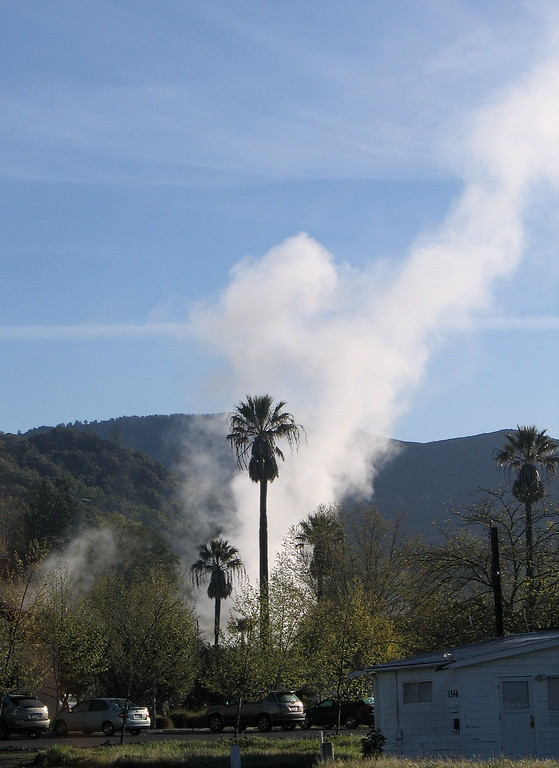 Palm Tree and Steam