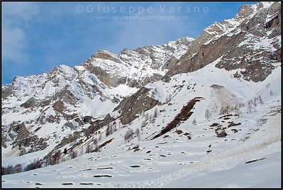 Val di Rhêmes - Gran Paradiso National Park  Giuseppe Varano - Nature and Wildlife Images - Birds and Nature Photography