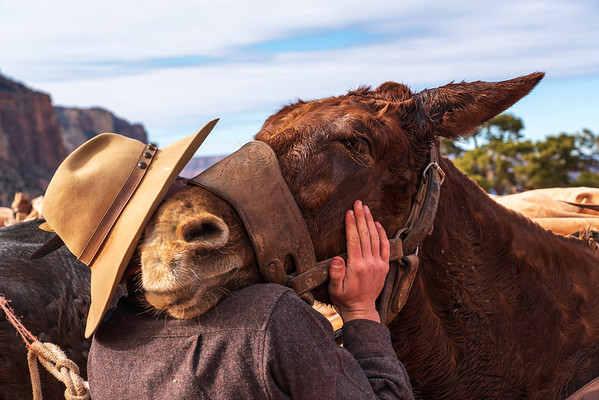 Grand Mule Hug
