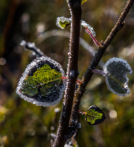 Morning Frost, North Rim, Grand Canyon, AZ