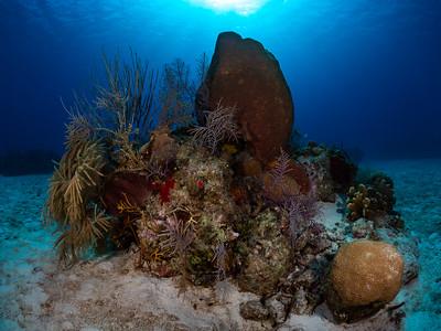 Sea Fans and Sponge