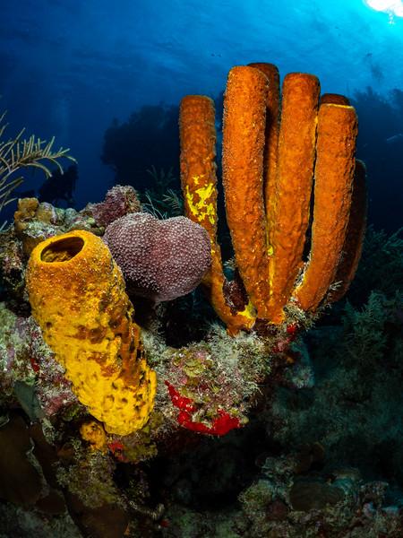 Hepp's Sponges