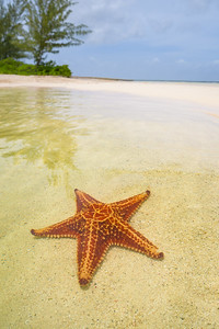Starfish on the Shoreline 2
