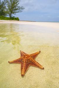 Starfish on the Shoreline 2