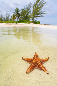 Starfish on the Shoreline