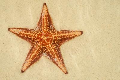 Starfish Underwater