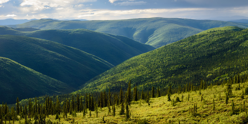 Into the Boreal Valley