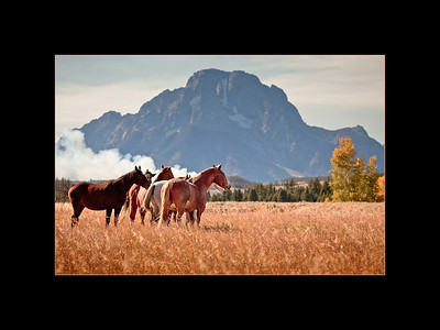 Horses with Mt. Moran and wildfire in distance, Grand Teton National Park
