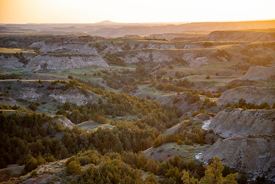 """A """"forest"""" of junipers in a ravine amongst the badlands of Theodore Roosevelt National Park in North Dakota."""