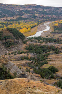 Bighorn and fall color in TRNP