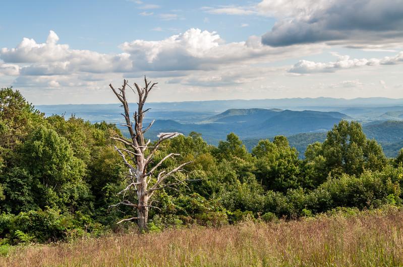 Tree Skeleton on the Blue Ridge