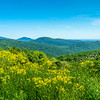 Spring Colors on the Blue Ridge