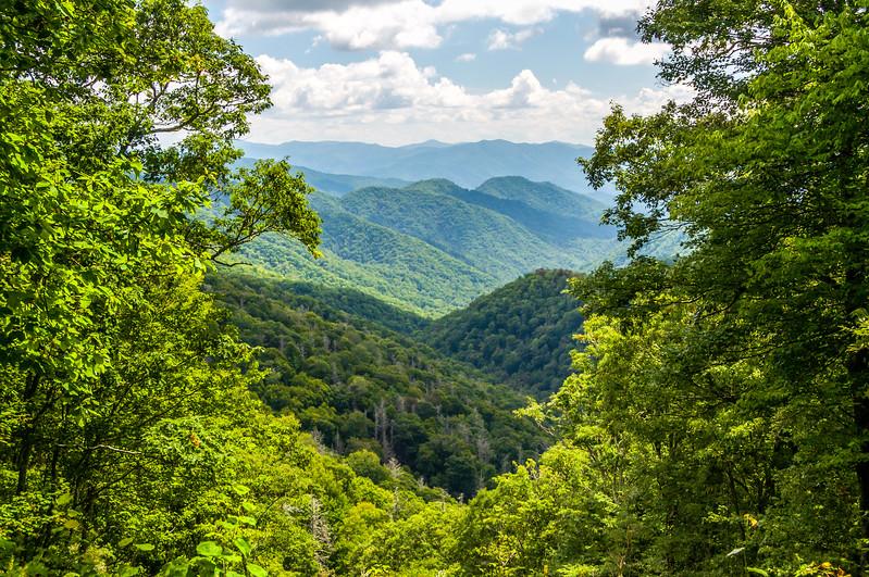 Smoky Mountains Through the Trees