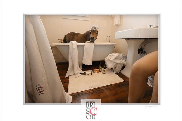 Bath Tub Pony