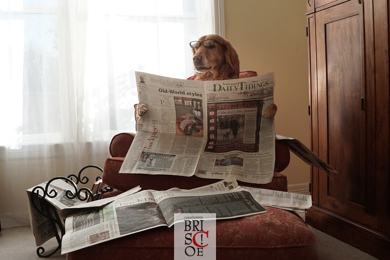 Doggie News
