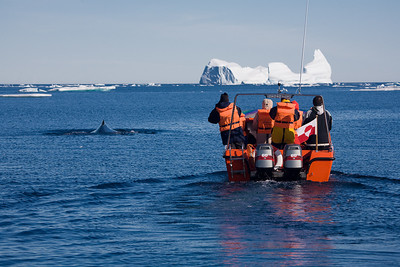 Tourists in boat watching a humpback whale.