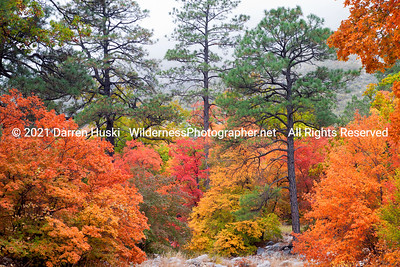 Rich fall colors in McKittrick Canyon