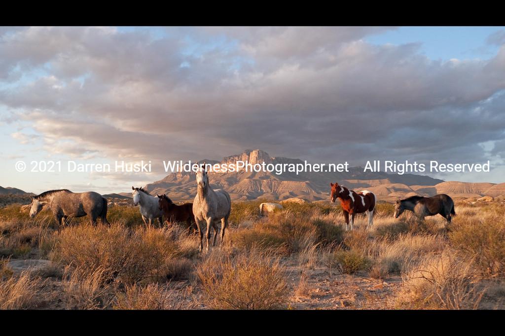 West Texas Mustangs