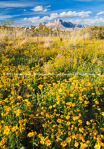 Wildflowers and Guadalupes -vertical.