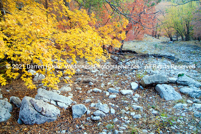 Dry stream with fall color in upper Dog Canyon.