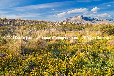 Wildflowers and El Capitan.