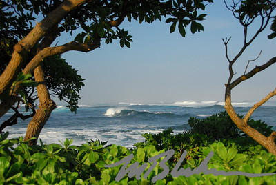 North Shore Oahu and Hau Trees