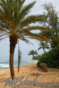 Palm Tree Oahu North Shore